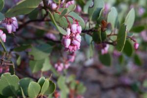 Flower in Tuttle Creek