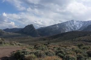 Southern White Pine range