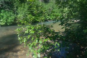 Creek crossing?