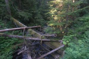 Logjam in Madaleine (?) Creek