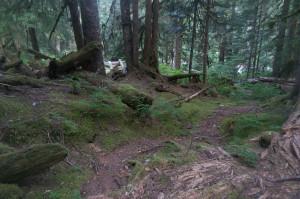 Good trail along Bachelor Creek
