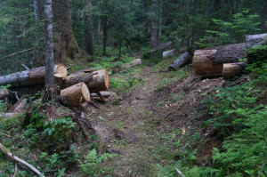 Recent log-cutting?