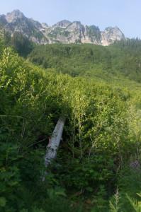 Trail crossing Bachelor Creek