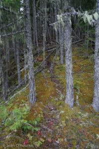 Climbers' trail